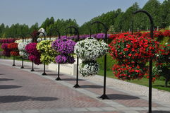 Dubai Miracle Garden in the UAE Royalty Free Stock Images