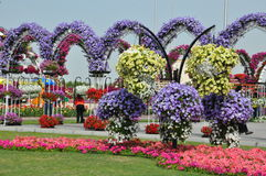 Dubai Miracle Garden in the UAE. It contains over 45 million flowers Royalty Free Stock Photos
