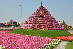 Dubai Miracle Garden in the UAE Stock Image
