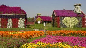 The Dubai Miracle Garden view stock footage