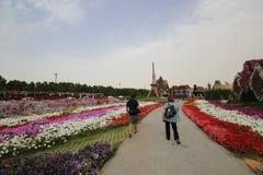 Dubai mirakelträdgård Arkivfoton
