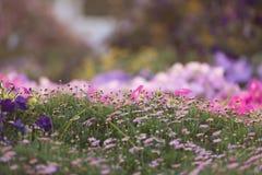 Dubai mirakelträdgård Royaltyfri Bild