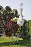 Dubai mirakelträdgård i UAE Arkivfoto