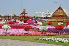 Dubai mirakelträdgård i UAE Arkivfoton