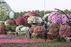 Dubai mirakelträdgård med över 45 miljon blommor Royaltyfri Fotografi