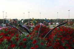 Dubai mirakelträdgård med över 45 miljon blommor i en solig dag på November 24 2015 Förenade Arabemiraten Royaltyfria Bilder