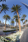 Dubai street with palm trees in UAE. Dubai street with palm trees in  United Arab Emirates Stock Photo