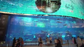 Dubai Aquarium and Under Water Zoo in the shopping mall`s interior Dubai Mall. People enjoying the beautiful view stock. Dubai, UAE - April 09, 2018: Dubai stock footage