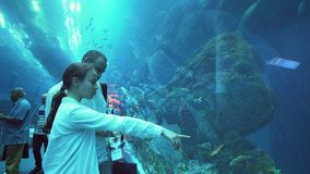 Teenage girl with dad admire the marine life in the glass tunnel of the Aquarium in Dubai Mall stock footage video stock video