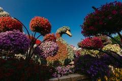 DUBAI, UAE - 5 de enero de 2019: Jardín del milagro de Dubai con más de 45 millones de flores en un día soleado, United Arab Emir fotos de archivo
