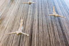 DUBAI, UAE - 22 DE JANEIRO: Cachoeira na alameda de Dubai - fotos de stock royalty free