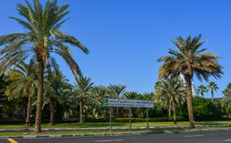 Street with palm trees in Dubai, UAE stock photos