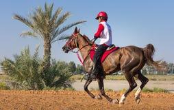 Rider participating in an endurance race. Dubai, UAE - Dec 19, 2014: Rider and his horse participating in a desert endurance race stock image