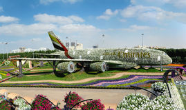 DUBAI UAE - DECEMBER 8, 2016: Dubai mirakelträdgård: Trädgården för blomma för världs` s den största naturliga Struktur som bilda Royaltyfri Fotografi