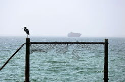 DUBAI - UAE - FEBRUARY, 2013: Silhouette of heron. Royalty Free Stock Image