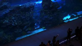 DUBAI, UAE - JANUAR 2018: Oceanarium in Dubai-Mall Dubai, UAE stock footage