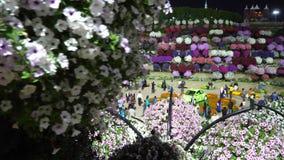 Dubai UAE - Januari 18, 2018: härlig dekorativ trädgård för blommaängDubai mirakel Turister som fotograferar på lager videofilmer