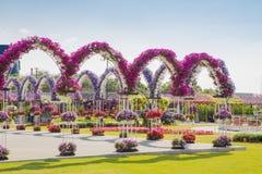 DUBAI UAE - JANUARI 20: Mirakelträdgård i Dubai, på Januari 20, Royaltyfri Fotografi