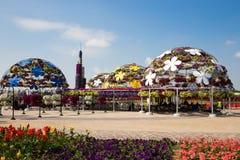DUBAI UAE - JANUARI 20: Mirakelträdgård i Dubai, på Januari 20, Arkivfoto