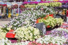 DUBAI UAE - JANUARI 20: Mirakelträdgård i Dubai, på Januari 20, Royaltyfria Bilder