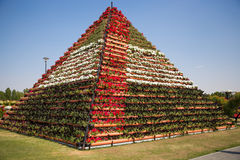 DUBAI, UAE - JANUARY 20: Miracle Garden in Dubai, on January 20, Royalty Free Stock Images