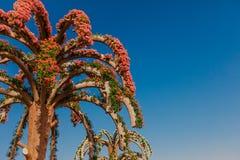 DUBAI, UAE - January 05, 2019 : Dubai miracle garden with over 45 million flowers in a sunny day , United Arab Emirates stock photography