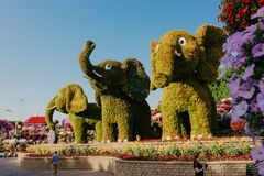 DUBAI, UAE - January 05, 2019 : Dubai miracle garden with over 45 million flowers in a sunny day , United Arab Emirates stock images