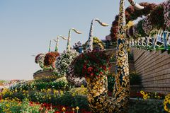 DUBAI, UAE - January 05, 2019 : Dubai miracle garden with over 45 million flowers in a sunny day , United Arab Emirates royalty free stock photo