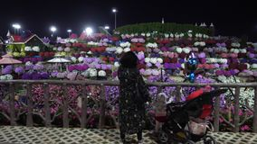 Dubai, UAE - January 18, 2018: people photographing multicolored flower bed with flowering plants in Dubai Miracle. Garden. Tourists walking in famous flowers stock video