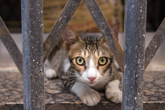 Dubai, UAE - July 16, 2016: Street portrait of a cat in Dubai. Royalty Free Stock Images