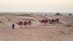 Dubai, UAE - 1. Juni 2013: Wohnwagen mit Kamelen in der arabischen Wüste Lizenzfreie Stockbilder
