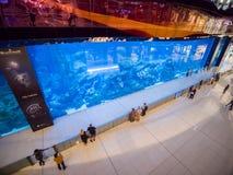 Dubai, UAE - May 15, 2018: Aquarium in Dubai Mall - world`s largest shopping mall, Downtown Burj Khalifa. royalty free stock photography