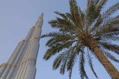 DUBAI, UAE - MAY 11, 2016:  Burj Khalifa tower. And pam tree Royalty Free Stock Photos