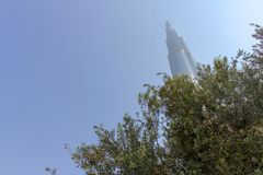 DUBAI UAE - NOVEMBER 12, 2018: Burj Khalifa torn som överst står av träd i i stadens centrum Dubai på solig klar himmelbakgrund royaltyfria foton