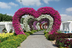 DUBAI, UNITED ARAB EMIRATES - DECEMBER 8, 2016: Dubai Miracle Garden is the biggest natural flower garden in the world. DUBAI, UNITED ARAB EMIRATES - DECEMBER 8 stock photo