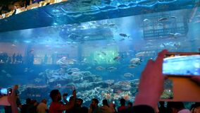 DUBAI, UNITED ARAB EMIRATES, UAE - NOVEMBER 20, 2017: Aquarium in Dubai Mall - world`s largest shopping mall. People. Enjoying the beautiful view stock video