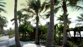 DUBAI, UNITED ARAB EMIRATES, UAE - NOVEMBER 20, 2017: Hotel Jumeirah Al Qasr Madinat , walk along the beach zone. Beautiful garden , all the greens are in the stock video