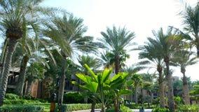 DUBAI, UNITED ARAB EMIRATES, UAE - NOVEMBER 20, 2017: Hotel Jumeirah Al Qasr Madinat , walk around the hotel, beautiful. Garden , all the greens are in the stock footage