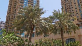 Dubaj marina słonecznego dnia palmowy podwórko 4k uae zdjęcie wideo