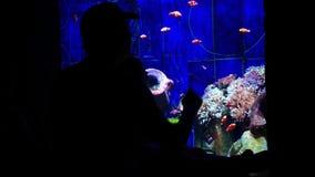 Dubaj, Uae - Styczeń 20, 2018 atlantis Dubai hotelowa wyspy jumeirah palma Ojciec i doughter patrzeje ryba Amphiprion lub błazenu zdjęcie wideo