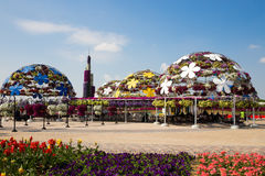 DUBAJ, UAE - STYCZEŃ 20: Cudu ogród w Dubaj, na Styczniu 20, Zdjęcie Stock
