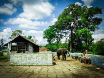 Dubare слона Стоковая Фотография