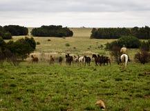 Dubb av att beta för hästar Arkivbilder
