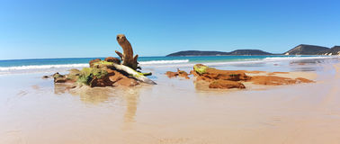 Dubbel öpunktstrand Queensland Australien royaltyfria bilder