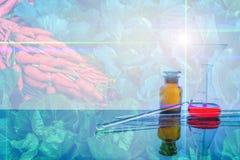 dubbel blootstellingsbeeld van groente en laboratorium Royalty-vrije Stock Fotografie