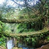 Dubbel Decker Root Bridge stock fotografie