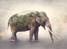 Dubbel exponering av elefanten och palmträd arkivfoton