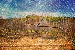 Dubbel exponering av träd på trän och den klippta trädstammen mot bakgrund field blåa oklarheter för grön vitt wispy natursky för Royaltyfria Bilder