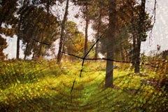 Dubbel exponering av träd på trän och den klippta trädstammen mot bakgrund field blåa oklarheter för grön vitt wispy natursky för Royaltyfri Fotografi