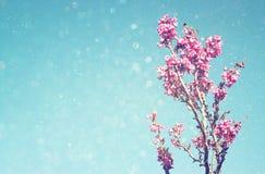 Dubbel exponering av trädet för körsbärsröda blomningar för vår abstrakt bakgrund det drömlika begreppet med blänker samkopiering Royaltyfria Foton